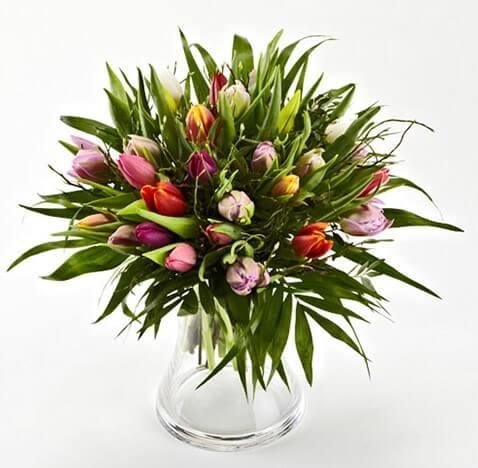 Blandede Tulipaner