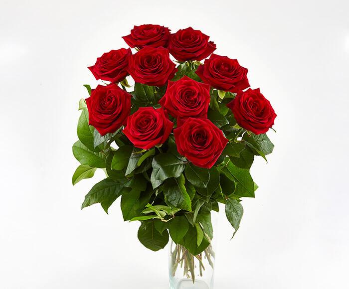 Langstilkede Røde Roser