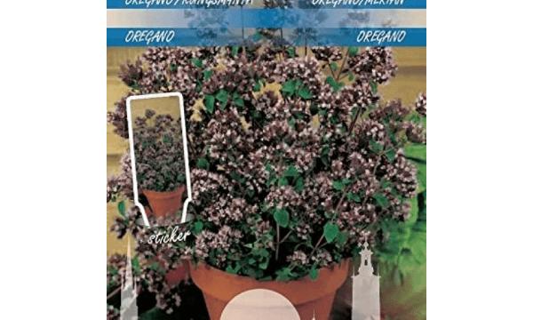 Oregano – Den nemme, smukke løsning