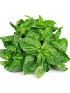 Basilikum (frø) – budgetvenlig krydderurt til salat og kødretter