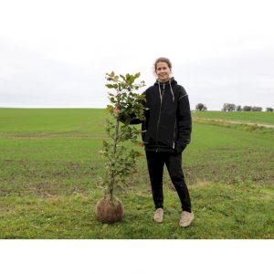 Færdig bøg med klump – effektiv og nem udplantning