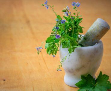 Krydderurter – få de bedste urter til haven og vindueskarmen