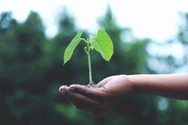 Færdighæk inspiration – find den bedste færdighæk til haven